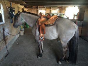 Carmelitta de Capitano (Kiger Mustang)