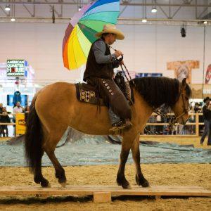 Equitana 2017: Kiger Mustang (Montana ) + Martin auf der Wippe