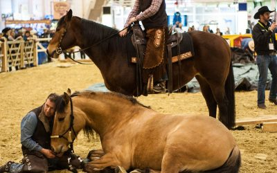 Die Equitana 2017 im Rückblick