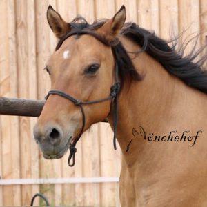 Kiger Mustang Mönchehof