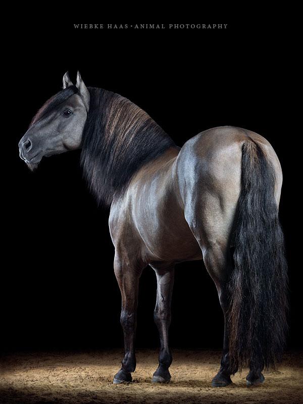 Quelle: Sandra Auer (CK Mustangs) | Foto: Wiebke Haas