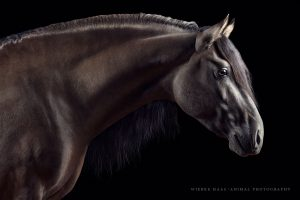 Kiger Mustang, Sandra Auer (CK Mustangs)