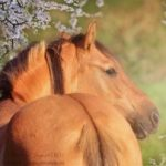 Profilbild von orianna29