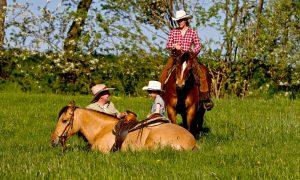 Montana (Kiger Mustang) und ihre Familie