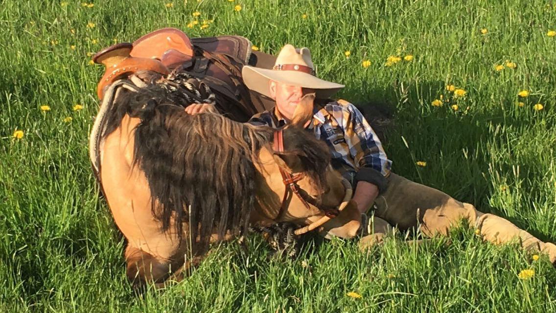 Montana (Kiger Mustang) liegt
